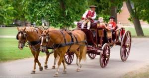 Historic horse and buggy